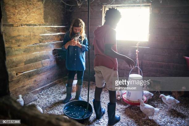 """kids playing with baby rabbits and chicken in an old barn. - """"martine doucet"""" or martinedoucet stock pictures, royalty-free photos & images"""