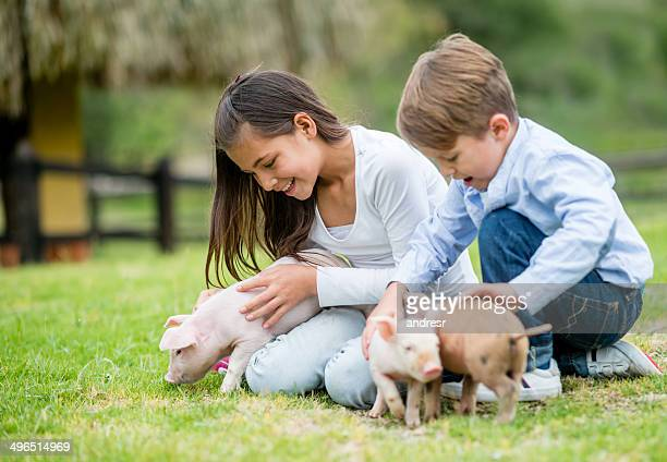 Kids playing with piglets
