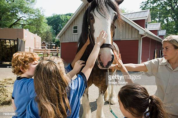 kids stroking horse - zoo keeper stock pictures, royalty-free photos & images