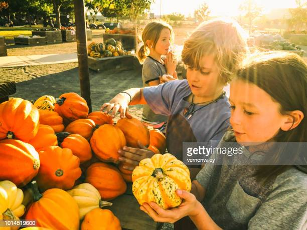 kids touching and exploring a pumpkin patch outside during sunset. - pumpkin patch stock photos and pictures