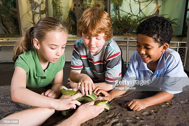 Kids touching snake