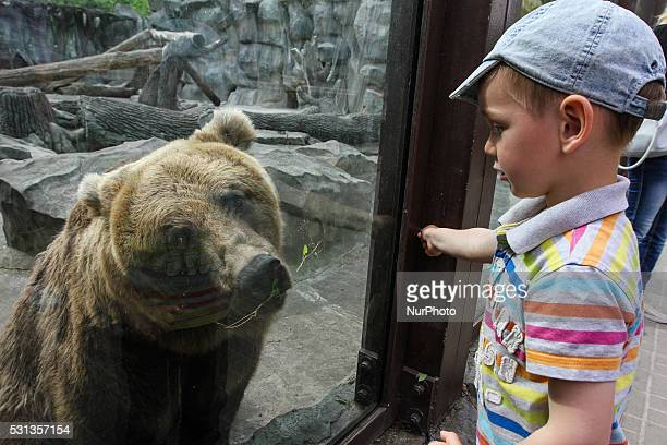 Kids try to feed a bear through the window of its cage at a Kiev zoo in Kiev Ukraine on May 11 2016 Kiev Zoo announces global changes animals will be...