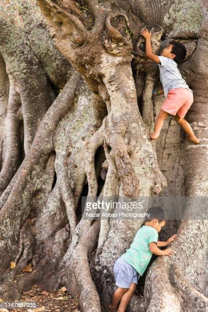 kids trying to climb on tree in park. - nazar abbas photography stock pictures, royalty-free photos & images