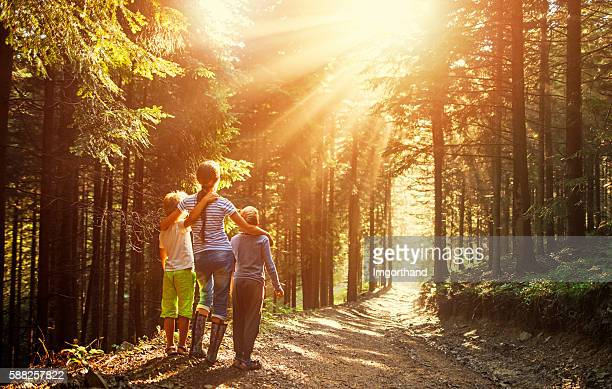kids watching beautiful sun beams in forest - woodland stock pictures, royalty-free photos & images