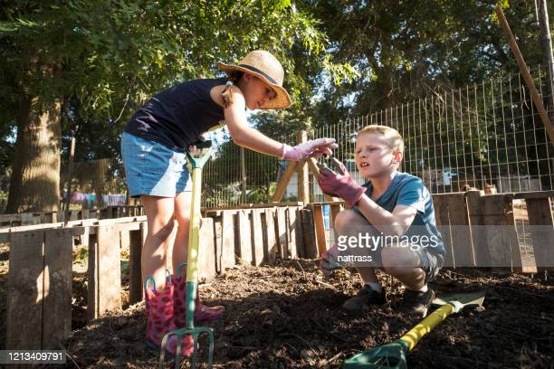 kids working in the compost heap - girl mound stock pictures, royalty-free photos & images