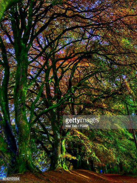 kielder forest in autumn, northumberland , england - northeastern england stock photos and pictures