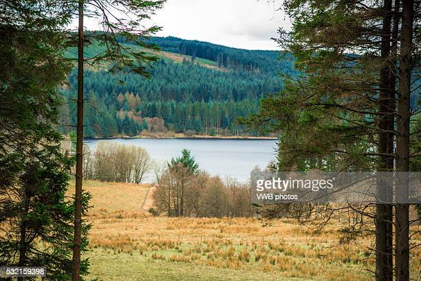 kielder water through the trees - northumberland stock photos and pictures