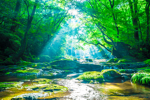 Kikuchi valley, waterfall and ray in forest, Japan 1156298839