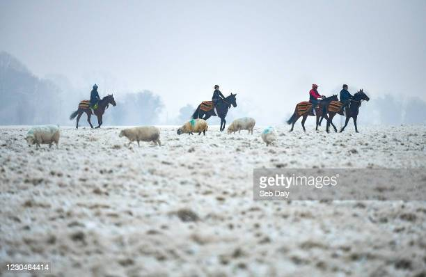 Kildare , Ireland - 7 January 2021; A string of horses from the yard of racehorse trainer Willie McCreery make their way to the gallops at the...