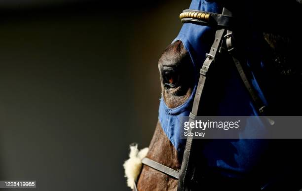 Kildare Ireland 9 September 2020 Annie Pender trained by John Queally prior to the Westgrove Hotel Maiden Hurdle at Punchestown Racecourse in Kildare