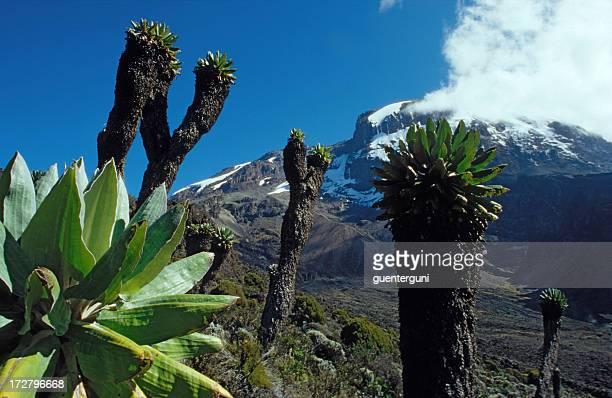 Kilimandjaro, Africas plus haute montagne