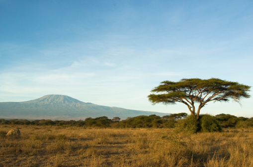 Kilimanjaro 172707067