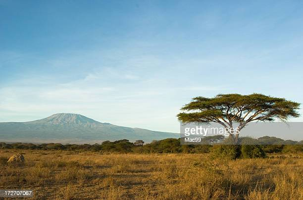 kilimanjaro - plain stock photos and pictures