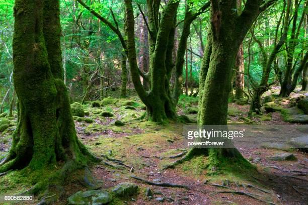 Killarney National Park im County Kerry, Irland