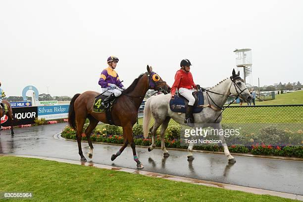 Kilowatt ridden by Daniel Moor returns after Sungold Milk BM70 Handicap at Warrnambool Racecourse on December 27, 2016 in Warrnambool, Australia.