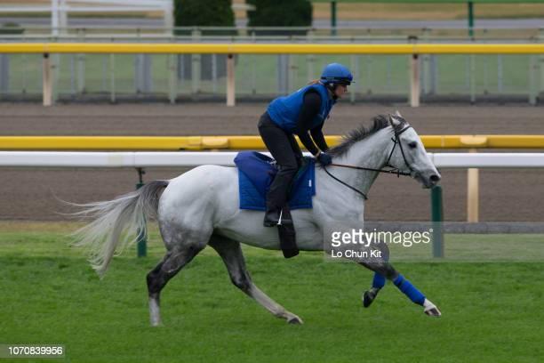 Kim Johnstone riding Thundering Blue prepare for Japan Cup at Tokyo Racecourse on November 22, 2018 in Fuchu, Tokyo, Japan.