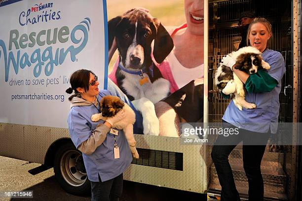 Kim Terlau and Kelly Ross carry Jackpot and Jiggy to their new home in a very large transfer of nearly 70 puppies from the Rescue WagginO about 12...