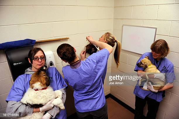 Kim Terlau Kelly Ross and Christina Cernac hold their charges as behavior and health coordinator Shana Snochowski checks and collars the dogs in...