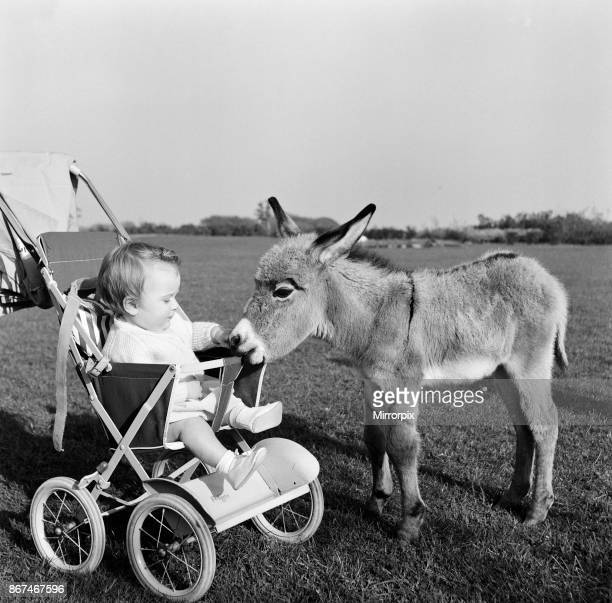 Kim the baby pygmy donkey who is a fortnight old makes the acquaintance of baby Susan ten months old She is quite amused and thrilled when Kim trots...