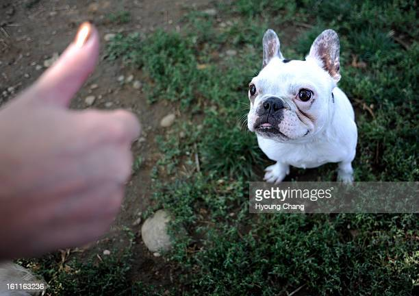 Kim Walter of Parker gives good dog sign to French Bulldog Josie during 10th annual Colorado Deaf Dog Play Day at Best Friends Pet Care in Wheat...