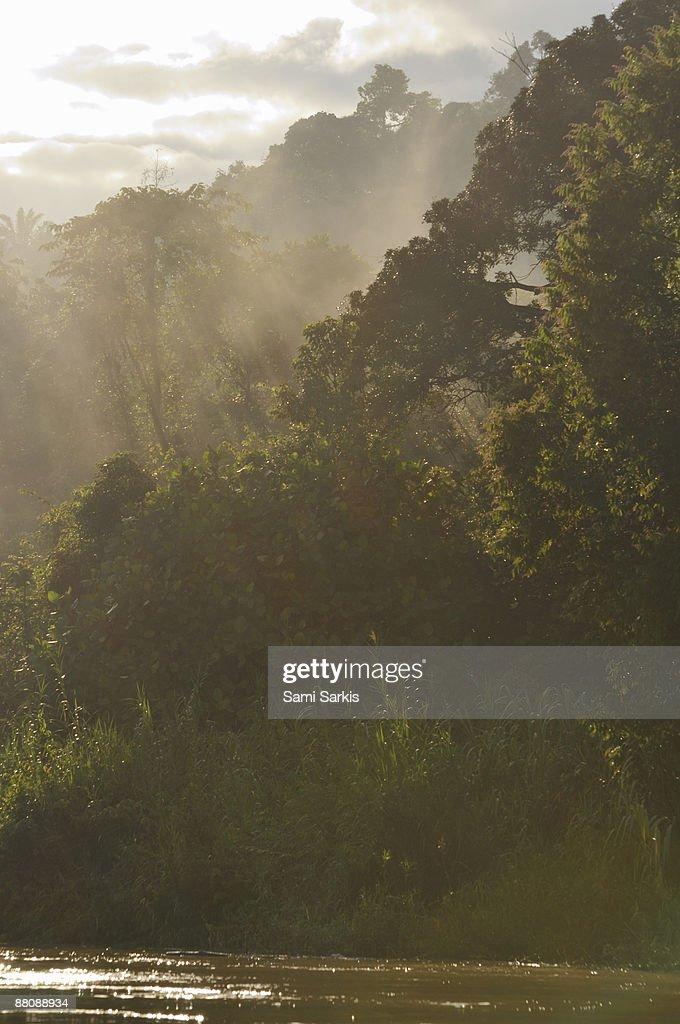 Kinabatangan River bank at sunrise : Stock Photo