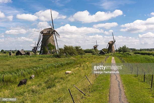 kinderdijk windmills - 干拓地 ストックフォトと画像