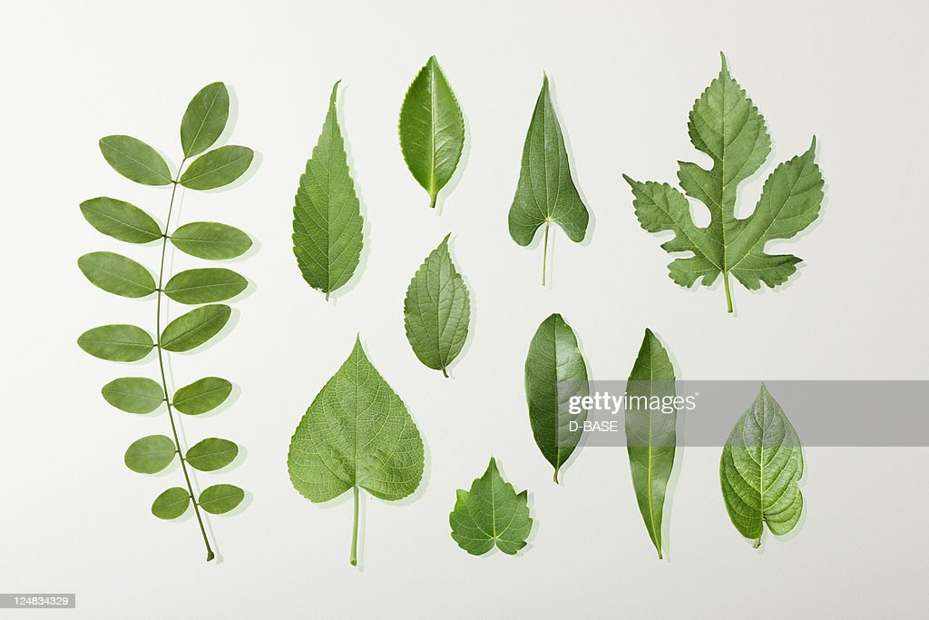 11 kinds of green leaves : Stock Photo