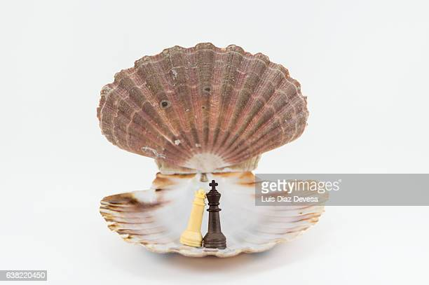 king and queen chess pieces - scallop stock photos and pictures