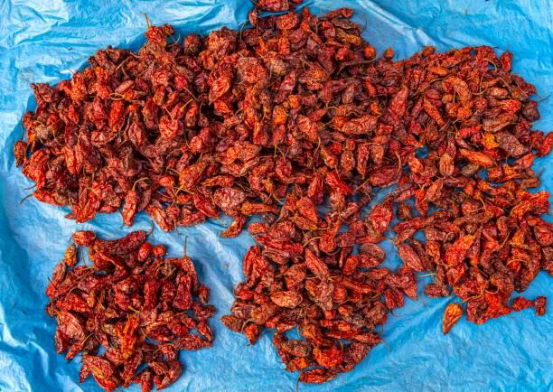 King Chili (U-Morok), hottest chilli in the world, Ima Keithel women´s market, Imphal, Manipur, India