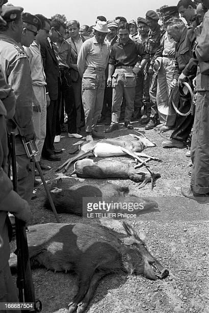 King Hussein Of Jordan Hunting With The Crown Prince Moulay Hassan Of Morocco. Au Maroc, le roi Hussein DE JORDANIE participe à une chasse donnée en...