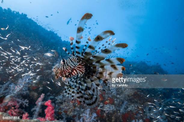 King of underwater