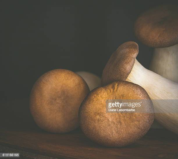 king oyster mushrooms. low key - king trumpet mushroom stock pictures, royalty-free photos & images