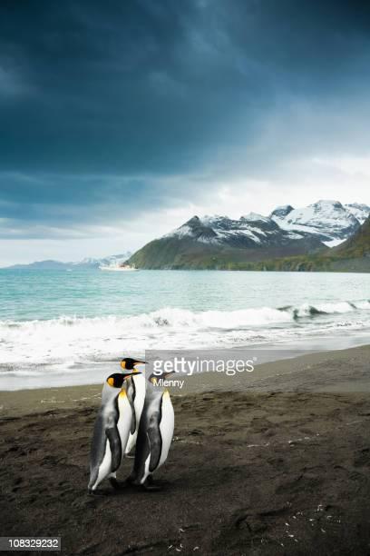 king penguin familie south georgia - falklandinseln stock-fotos und bilder