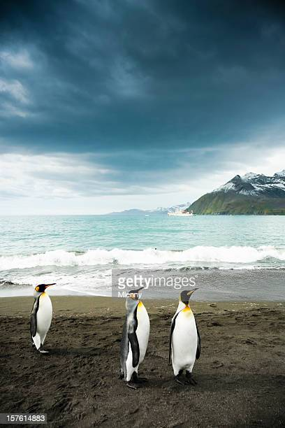 Pinguine am Strand mit King-Size-Bett South Georgia