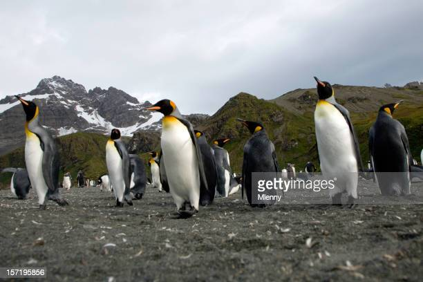 King Penguins from Below