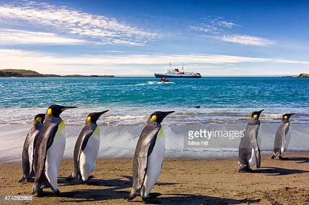 king penguins on the beach - zuid georgia eiland stockfoto's en -beelden