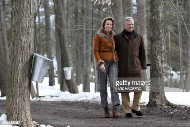 King Philippe and Queen Mathilde of Belgium walk past trees collecting maple sap as they arrive at a maple syrup sugar shack during their state visit...