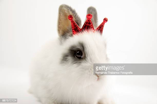 King rabbit with a red crown above head