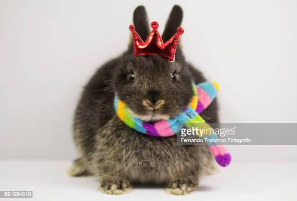 king rabbit with a red crown above head - osterhase stock-fotos und bilder