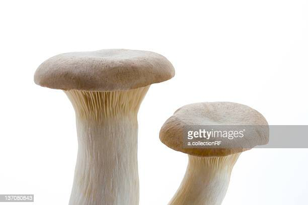 king trumpet mushroom  - king trumpet mushroom stock pictures, royalty-free photos & images