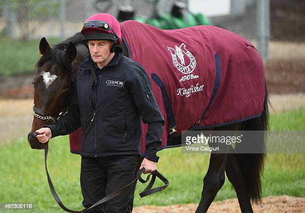 Kingfisher fom the Aidan O'Brien stable is seen before a trackwork session at Werribee Racecourse on October 12 2015 in Melbourne Australia