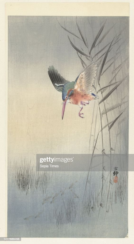 Kingfisher hunting fish, Kingfisher with wings spread on reeds, hunting fish in the water., Ohara Koson (mentioned on object), Japan, 1900 - 361909, paper, colour woodcut, h 345 mm × w 189 mm : ニュース写真