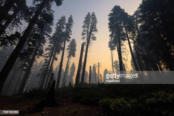 kings canyon national park after a forest fire, hume, california, america, usa - environmental damage stock pictures, royalty-free photos & images