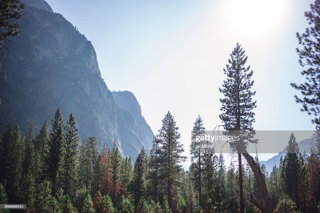 Kings Canyon National Park-California : Stock-Foto