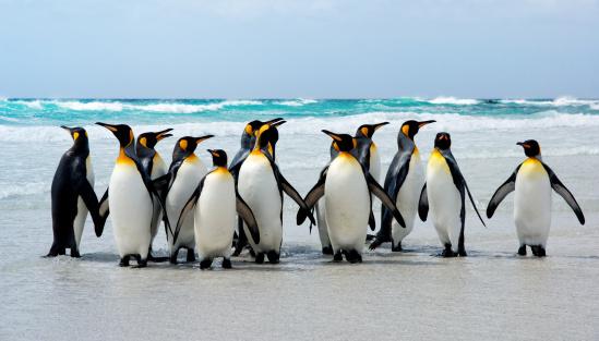 Kings of the Beach 148229066
