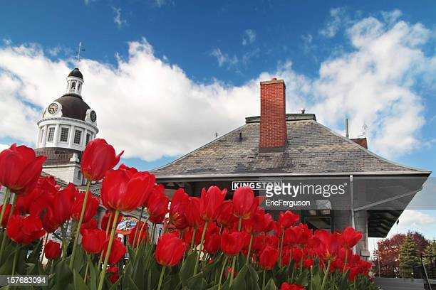 kingston downtown with tulips and historic train station - kingston ontario stock photos and pictures
