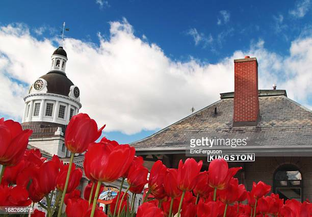 kingston downtown with tulips and train station - kingston ontario stock photos and pictures