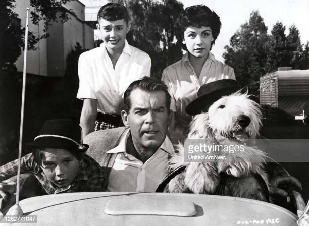 Kino. Der Unheimliche Zotti, Shaggy Dog, The, Der Unheimliche Zotti, Shaggy Dog, The, Kevin Corcoran, Roberta Shore, Fred MacMurray, Annette...
