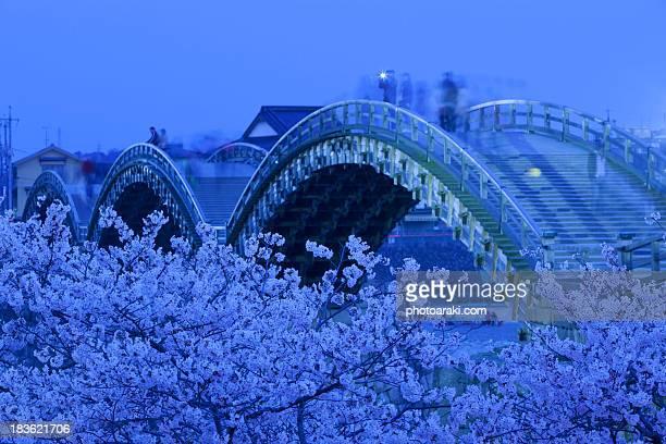 Kintai bridge and cherry blossoms at Night