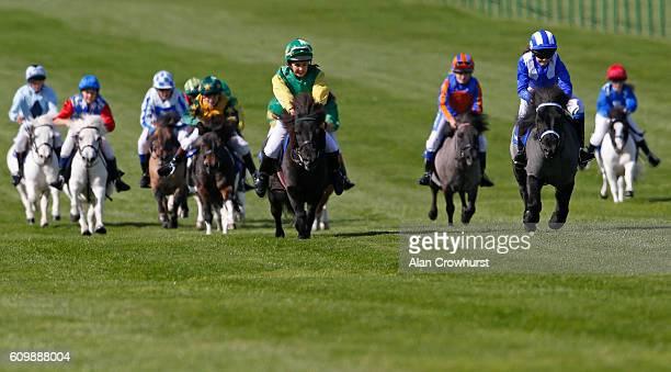 Kinvara Garner riding Briar Smokey Joe win The Shetland Pony Grand National at Newmarket Racecourse on September 23 2016 in Newmarket England